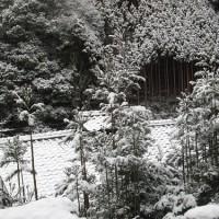 北山杉と雪