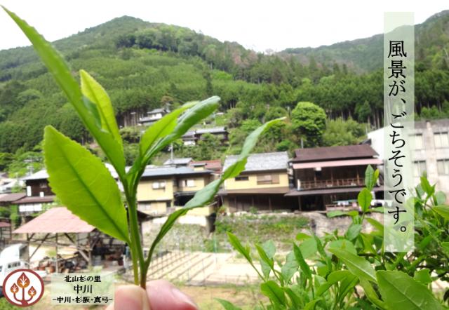 140526_中川お茶摘み