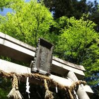 中川八幡宮の新緑