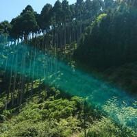 DSC_0225 50%お茶畑