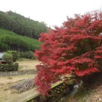 DSC02901縮小30%真弓川沿い紅葉