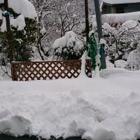 雪がこんなに